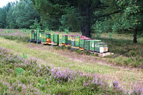 Bienenvölker, Honig, Imkerei